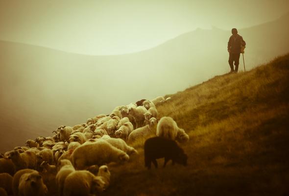 Corporate Shepherd