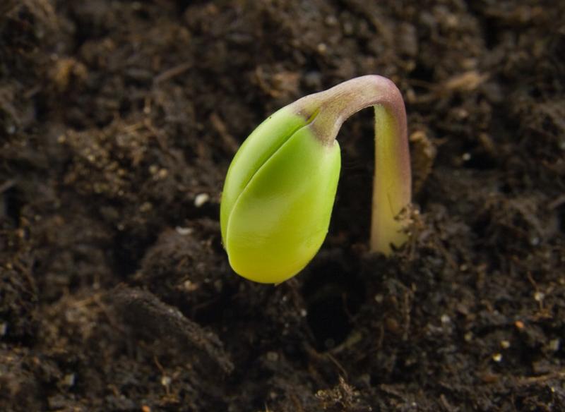 Help them Grow or Watch them Go!